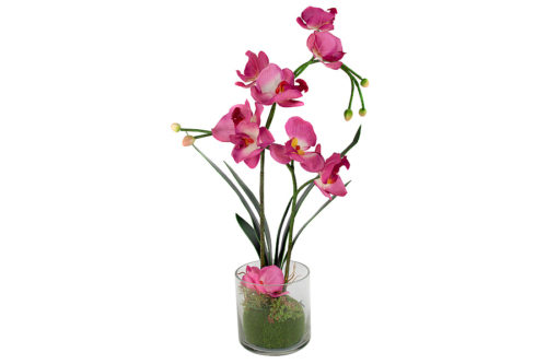 Декоративные цветы Орхидея бордо в стеклянной вазе